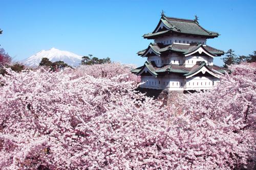 Hirosaki thuộc tỉnh Aomori là điểm ngắm hoa anh đào thú vị ở Nhật Bản.