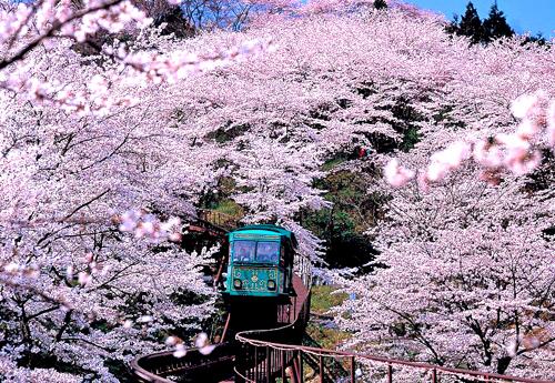 Những chuyến tàu JR East Pass sẽ giúp bạn chiêm ngưỡng hết vẻ đẹp của vùng Tohoku, Nhật Bản.