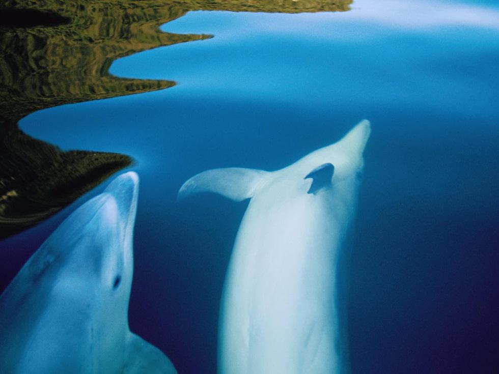 Những chú cá heo tung tăng bơi lội trong rừng quốc gia Fiordland - Ảnh: Annie Griffiths