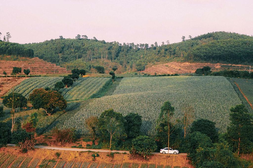 """Nông trại dứa Tam Điệp thuộc nông trường Đồng Dao tọa lạc tại thành phố Tam Điệp, Ninh Bình, nằm cách Hà Nội khoảng 100 km, là địa điểm mới toanh trên mảnh đất """"nghìn góc check-in"""", thu hút giới trẻ."""