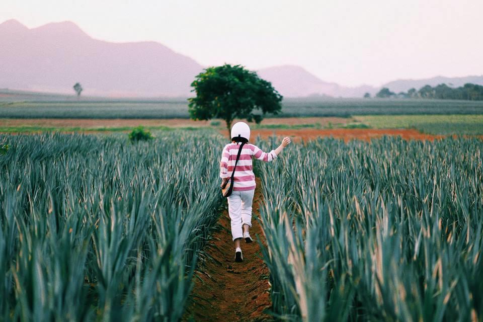 Du khách không phải trả phí khi tham quan, chụp ảnh tại trang trại, nhưng nên xin phép những người quản lý trước khi vào. Ngoài ra, bạn cũng không được tự ý hái quả, bẻ lá, giẫm lên bụi dứa trong khu vực nông trại.