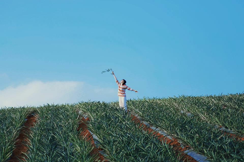 """Không chỉ thả mình vào không gian bát ngát, mướt mắt của cánh đồng dứa, bạn còn được hít hà mùi hương thoang thoảng của trái thơm chín lan tỏa khắp nơi. Không gian trang trại khiến du khách như lạc vào """"tiểu Đà Lạt"""" giữa vùng núi Ninh Bình."""