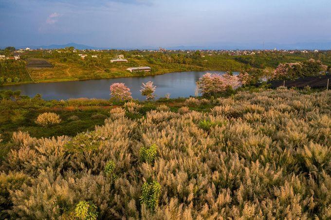 Những cây hoa hồng phấn khoe sắc bên hồ Nam Phương nhìn từ phía xa.