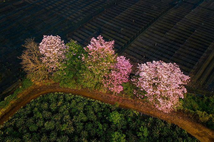 Một khóm hoa rực rỡ nổi bật giữa màu xanh của cây cối xung quanh.