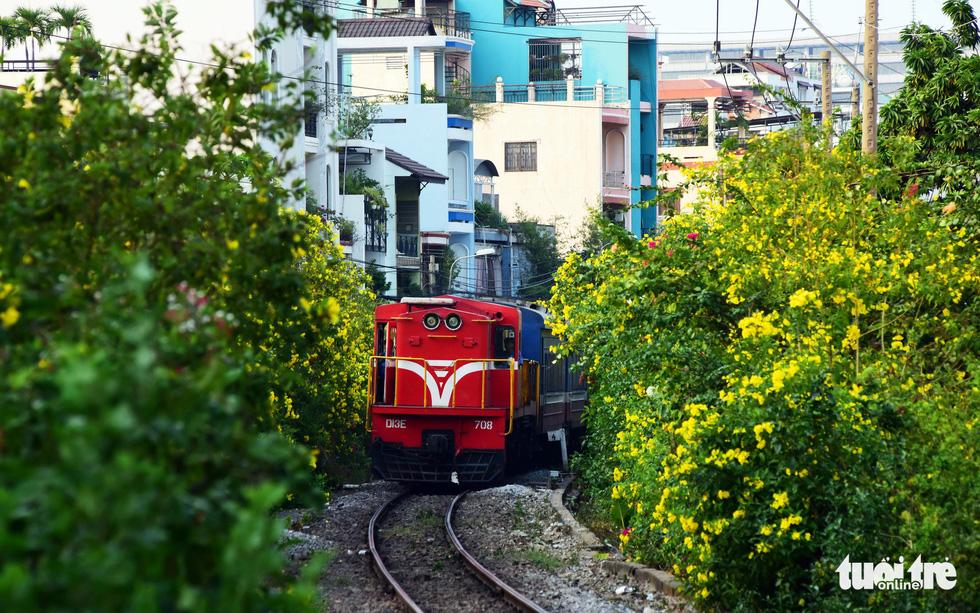 Hoa huỳnh liên nở vàng hai bên đường ray, khi có xe lửa đi qua tạo nên khung cảnh lãng mạn