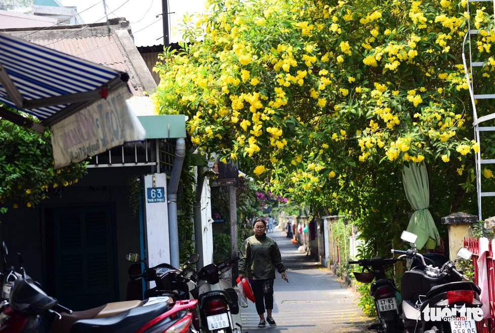 Hoa phủ lên trên những mái nhà, che mát cho người đi đường