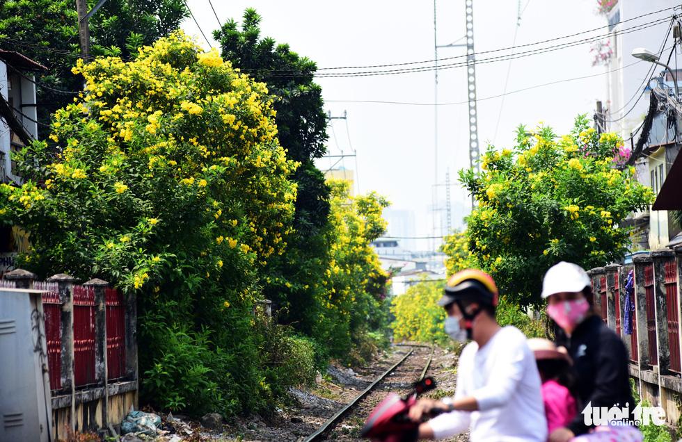 Hoa được trồng trải dài bên đường ray