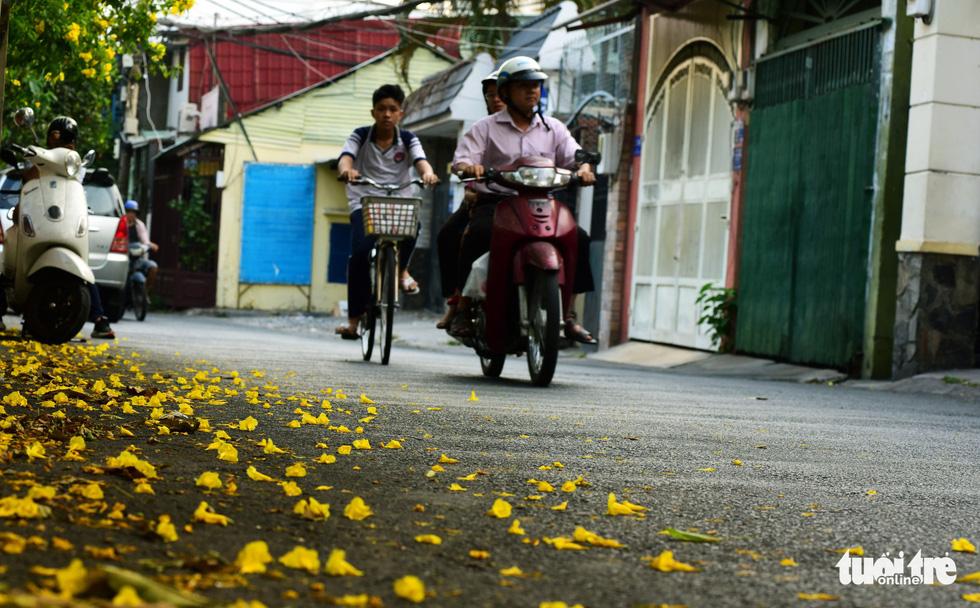 Những bông hoa huỳnh liên rơi rụng làm khung cảnh trở nên lãng mạn hơn