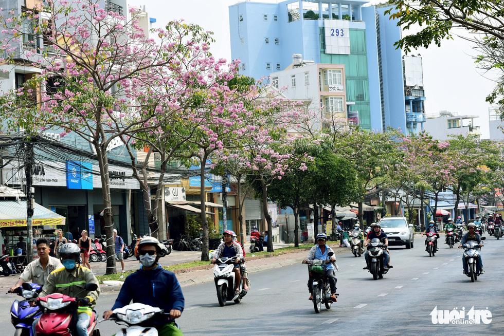 Hoa kèn hồng nở rộ trên tuyến đường Điện Biên Phủ, hướng từ ngã tư Hàng Xanh, quận Bình Thạnh sang quận 1 - Ảnh: DUYÊN PHAN
