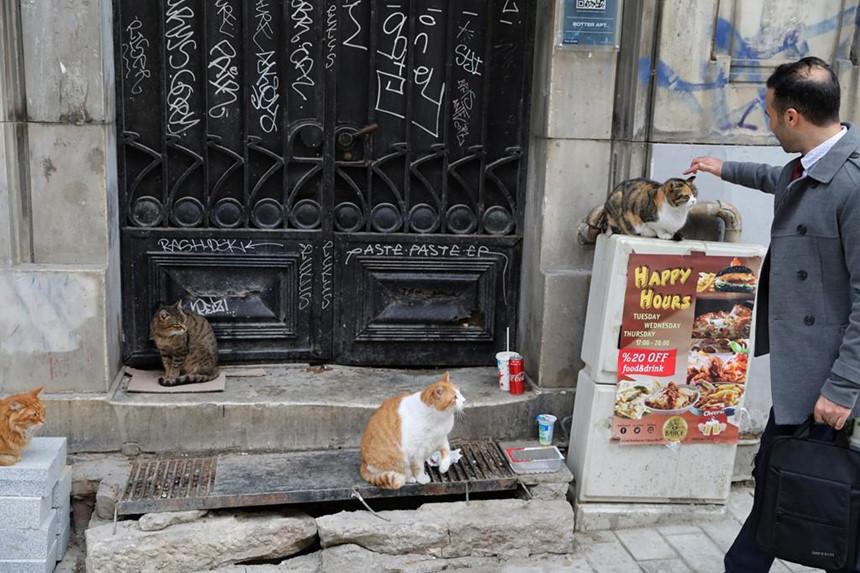 Mèo không vô tâm, đơn giản là chúng biết nhiều hơn con người. Ảnh: Yahoo Noticias.
