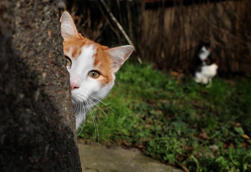 Mèo mang một vị thế quan trọng trong những ghi chép của đạo Hồi. Ảnh: Standard UK.
