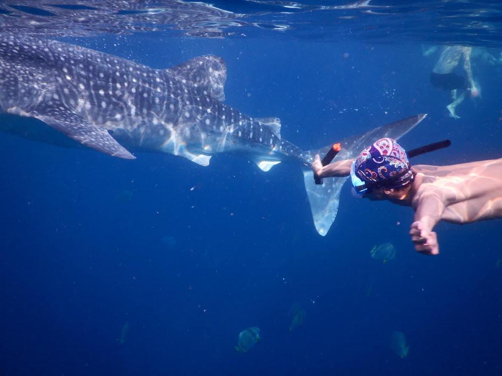 7h30, tôi mới được đặt chân lên thuyền để bắt đầu hàng trình ngắm cá mập của mình. Cá mập bạn được chiêm ngưỡng thuộc loài cá mập voi, có chiều dài trung bình từ 3-5 m. Trong trải nghiệm, bạn có thể lặn sâu xuống để chiêm ngưỡng và chụp ảnh cùng cá.