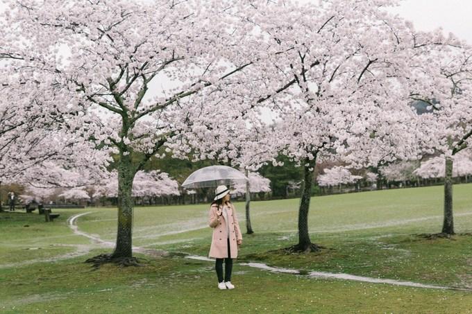 Tuỳ vào thời tiết mỗi năm, hoa đào ở Nara thường nở vào khoảng nửa cuối tháng 3, đầu tháng 4. Khi nói đến thành phố này, người ta hay nghĩ đến những chú nai ở công viên Nara và các di tích lịch sử. Đây từng là cố đô của Nhật trong thế kỷ thứ 8.