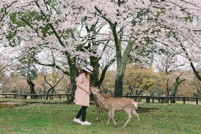 Công viên có bán bánh Nara-senbei - món ăn ưa thích của những chú nai. Do được nuôi thả hoang dã nên chúng thường vây quanh những người cho ăn. Bạn có thể mua và đút cho những vị sứ giả đặc biệt này ăn nhưng đừng giật mình nếu nhanh chóng bị một đàn vây quanh.