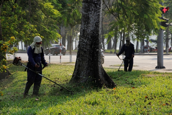 Bốn cây hoa gạo trồng ở đường Lê Duẩn được nhân viên cây xanh chăm sóc kỹ lưỡng, cắt bớt cỏ mọc ở phía xung quanh gốc cây.