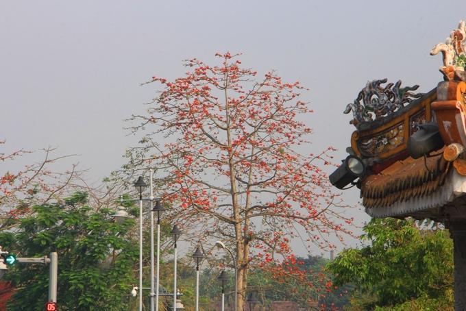 """Hoa gạo trong ánh nắng bên những công trình cổ kính ở Huế.  Với hơn 63.000 cây xanh trên các tuyến đường, công viên, vào năm 2016, thành phố Huế từng được tổ chức Bảo tồn thiên nhiên thế giới trao danh hiệu """"Thành phố Xanh quốc gia"""".  Tỉnh Thừa Thiên Huế cũng đang lên kế hoạch xây dựng thành phố bốn mùa hoa và cố gắng tạo nên những vườn hoa mang thương hiệu xứ Huế nằm hai bên bờ sông Hương"""