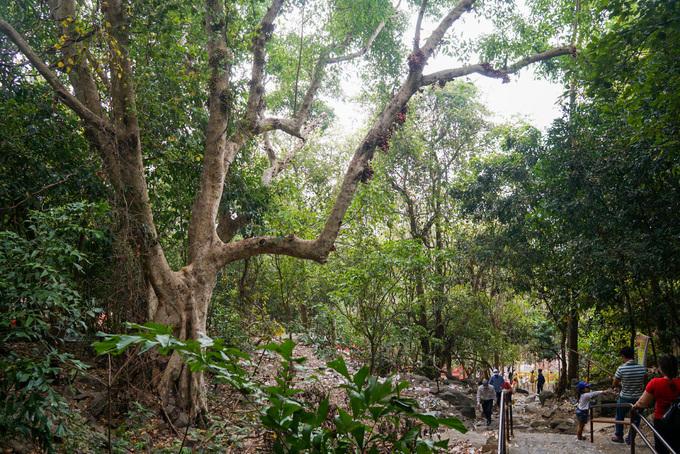 Dẫn lên chùa là con đường 1.500 bậc, đi vòng quanh những tảng đá, cây rừng um tùm hai bên. Từ chân núi mất hơn một giờ để lên đến chùa nằm ở độ cao hơn 200 m.