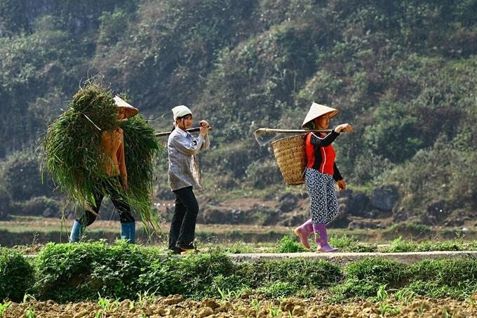 Người dân trồng lúa ngoài ruộng, hoa màu và rau ở những khu vườn kế bên nhà.