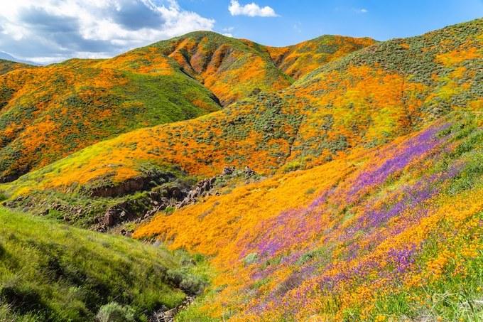 Walker Canyon, hẻm núi thuộc dãy Temescal, quận Riverside, bang California (Mỹ) trở nên nổi tiếng vào giữa tháng 3 năm nay nhờ khoác lên mình bộ cánh màu cam đẹp như một bức tranh.
