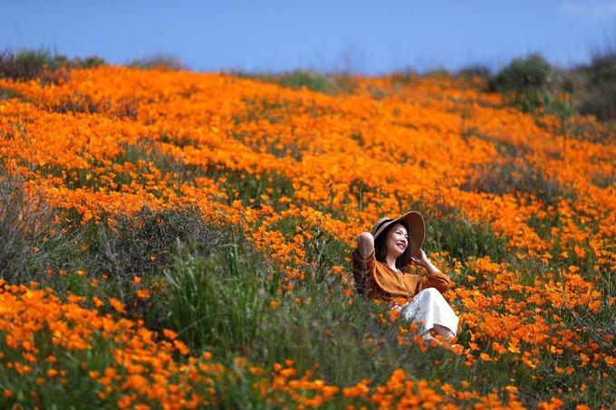 Theo thống kê, từ đầu tháng 3 đến nay, đã hơn 50.000 người tham gia chuyến trekking khoảng 100 km giữa biển cam này để ngắm cảnh, chụp ảnh.