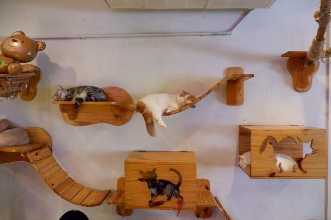 Hàng chục con mèo nằm vắt vẻo khắp quán.