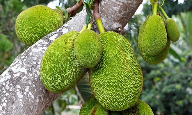 9-vườn-trái-cây-gần-xịt-Sài-Gòn-ivivu-6