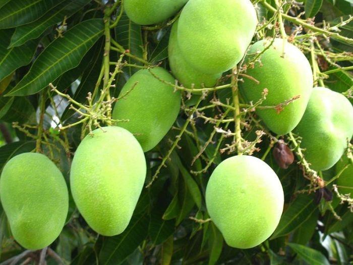 9-vườn-trái-cây-gần-xịt-Sài-Gòn-ivivu-7