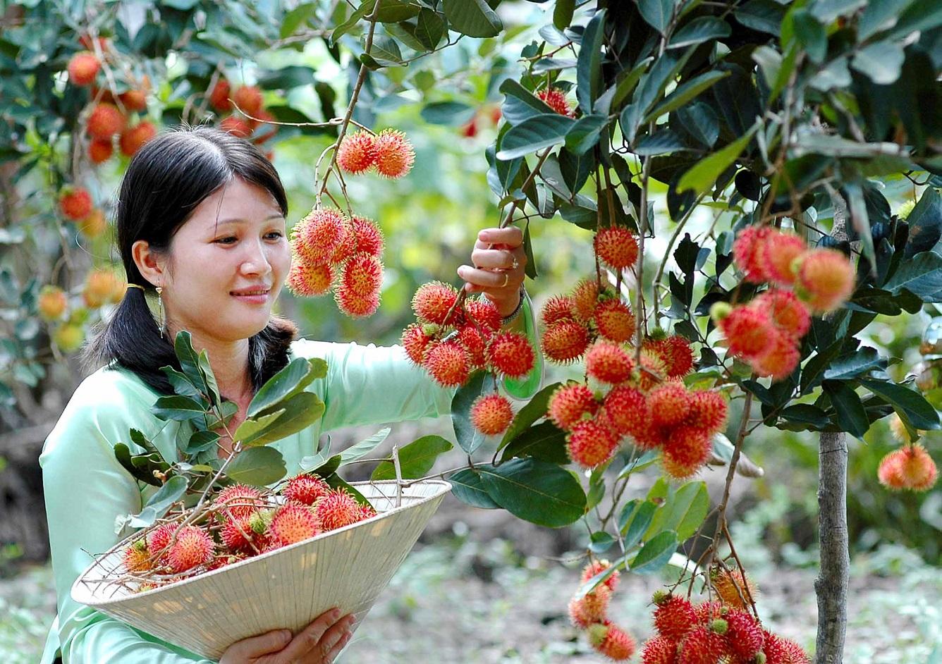 9-vườn-trái-cây-gần-xịt-Sài-Gòn-ivivu-8