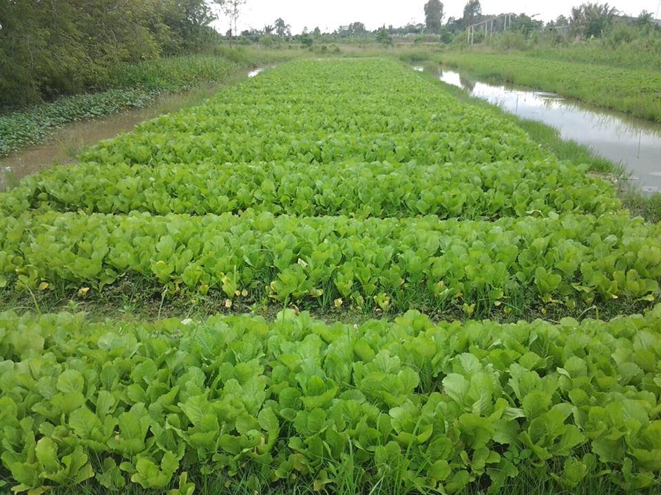 Green Village Mekong - ivivu-2