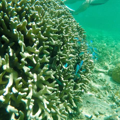 Bạn có thể khám phá thế giới san hô đầy màu sắc, chiêm ngưỡng hàng nghìn loài cá, thậm chí có thể nhìn thấy cả cá mập. Vẻ đẹp thiên nhiên nên thơ, thiên đường sinh vật biển độc đáo và những trải nghiệm thú vị, khó quên tại quốc đảo Fiji sẽ là tất cả những gì đang chờ đón bạn vào mùa hè này. Ảnh: Shaedools.