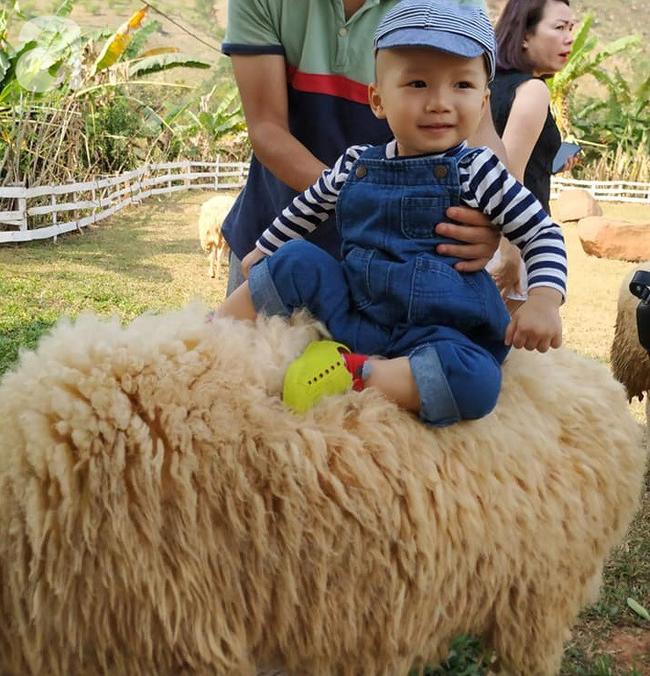 Còn cả 1 trang trại cừu, em bé cười tít mắt vì lần đầu được sờ và cưỡi cừu.