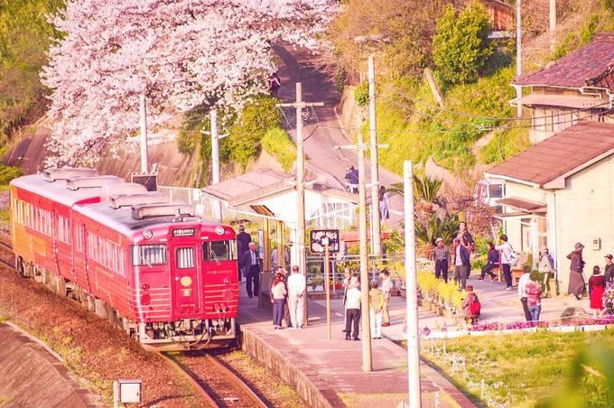 Bạn sẽ mất khoảng một tiếng di chuyển bằng tàu hoặc xe hơi từ trung tâm Ehime để đến nhà ga này. Mùa hoa anh đào thì đông du khách hơn. Mỗi ngày chỉ có vài chuyến tàu đi ngang, nếu muốn xem tàu, bạn nên kiểm tra giờ tàu chạy trước khi đến.
