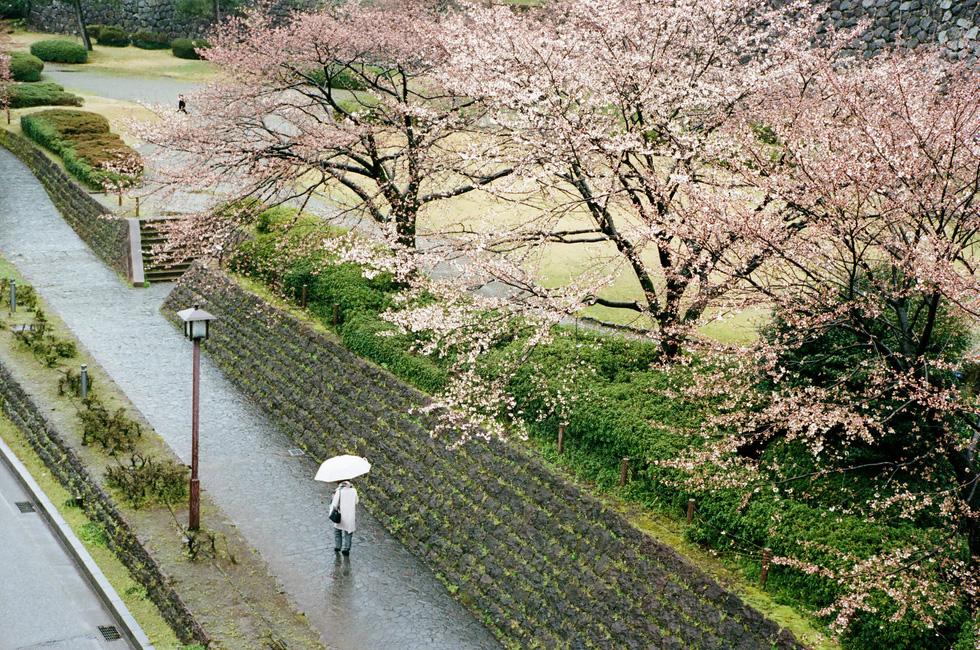 Một người phụ nữ bước đi dưới trời mưa gần lâu đài Kanazawa - Ảnh: ĐĂNG TRÌNH