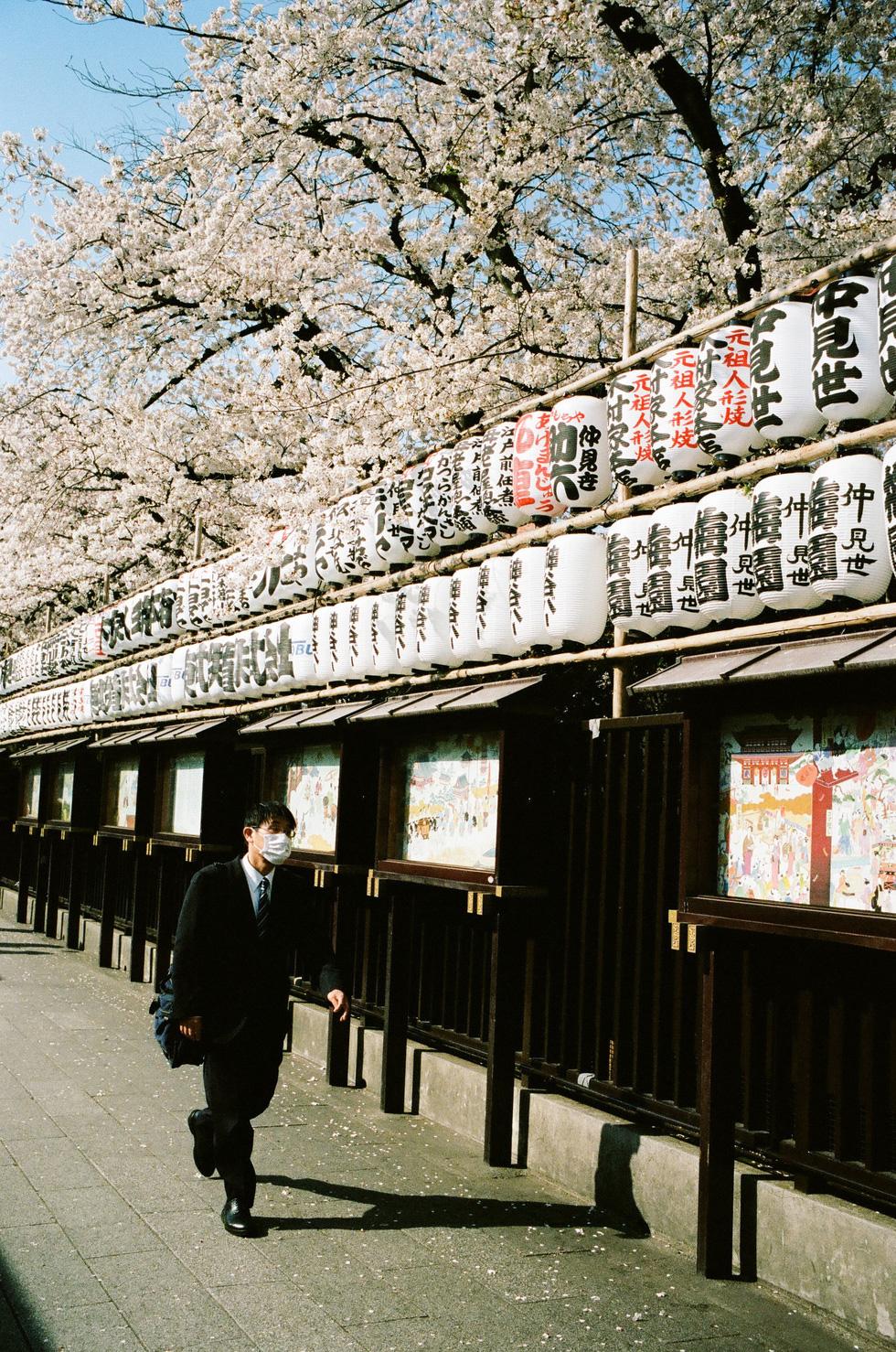 Một góc khuôn viên đầy hoa chùa Sensoji, Tokyo - Ảnh: ĐĂNG TRÌNH