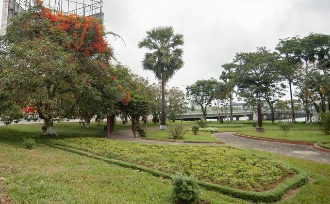 Người dân Huế cho biết, đây là giống hoa chạc quạch dạng dây leo thường mọc tự nhiên trong rừng, sau được nhân giống trồng tại thành phố. Ảnh chụp tại công viên bờ bắc sông Hương.