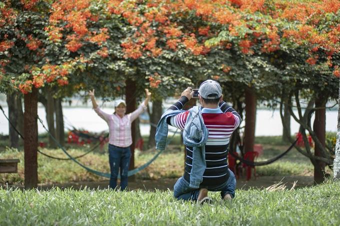 Vùng đất cố đô Huế đang thu hút các bạn trẻ và du khách tới ngắm và chụp hình hoa lâm phượng vỹ tại công viên dọc bờ bắc dòng Hương Giang và trên con đường đi dạo ở đồi Vọng Cảnh.