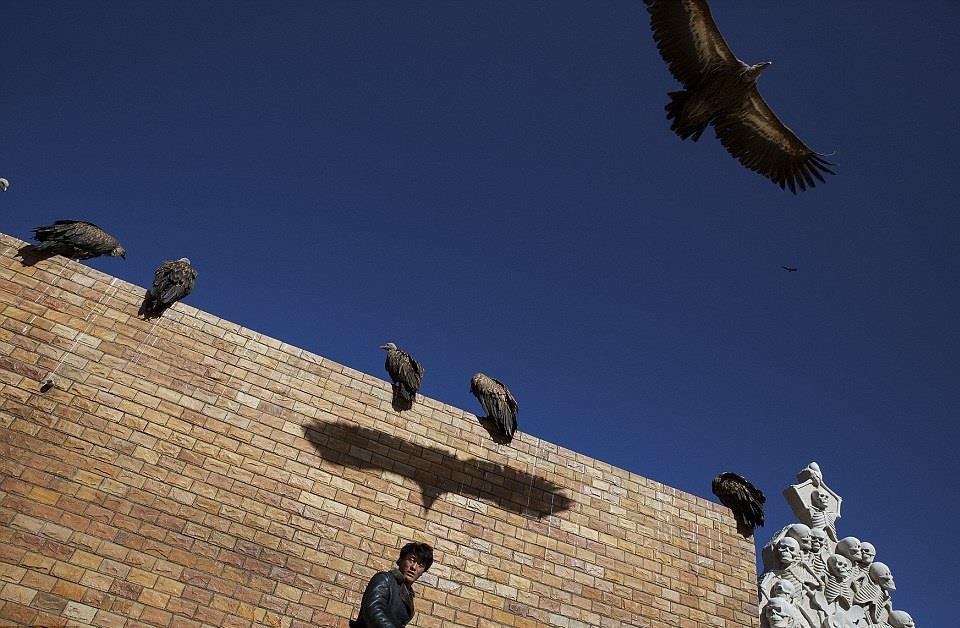 Tại khu thiên táng thuộc thung lũng Larung (Garze, Tây Tạng), những con kền kền đen bay kín trời, chuẩn bị tiến đến thi thể người chết và rỉa xác. Các rogyapa (người xử lý xác chết) thu hút kền kền bắng cách đốt cây bách xù. Trong văn hóa của người Tây Tạng, kền kền được coi là loài vật linh thiêng.