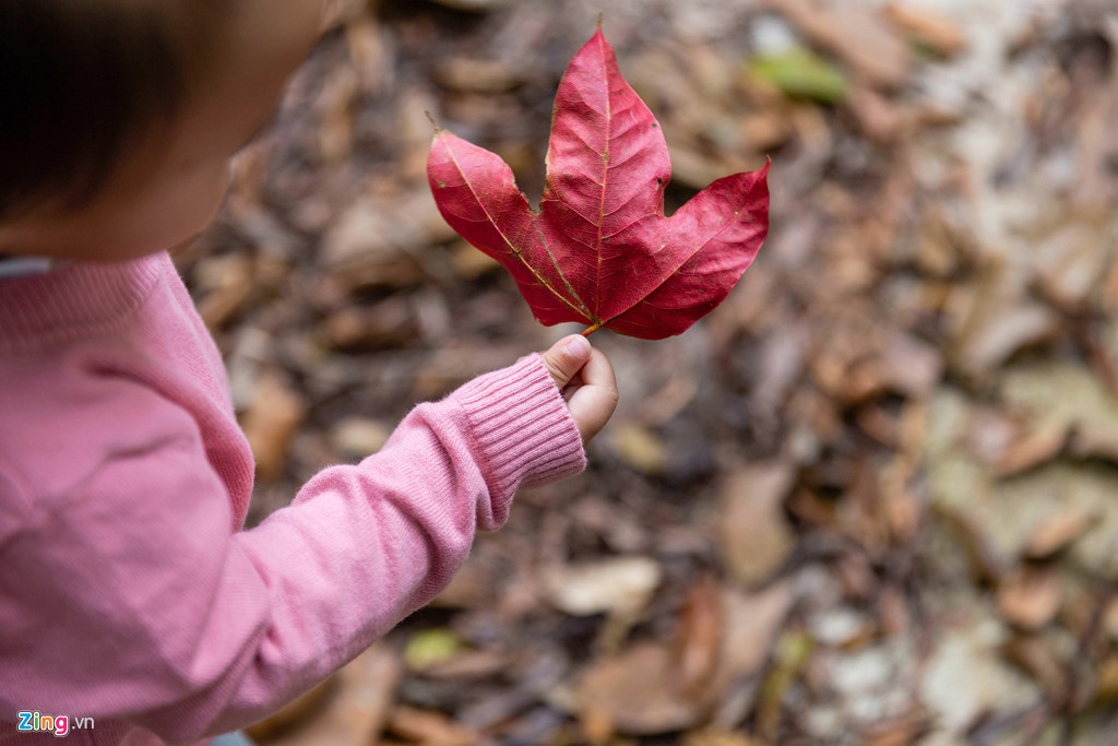 Cây sau sau ở đây lá có ba thùy nhọn. Vào dịp tháng ba, lá bắt đầu chuyển dần sang đỏ, tạo nên cảnh sắc tuyệt đẹp cho vườn quốc gia. Nhiều người hay gọi là phong Bạch Mã vì nó hao hao giống lá phong (lá phong có 5 thùy).