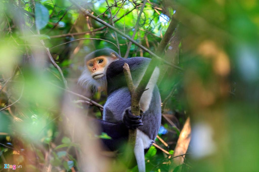 Voọc chà vá chân nâu hay còn gọi là Voọc ngũ sắc hiện tại ở đây đang tăng lên với tổng cộng 6 đàn. Loài này thường sống trong rừng già, rừng nguyên sinh trên núi cao, nhưng có thể kiếm ăn cả ở rừng thứ sinh, rừng hỗn giao, nương rẫy. Thức ăn ưa thích của chúng là các loại lá cây.