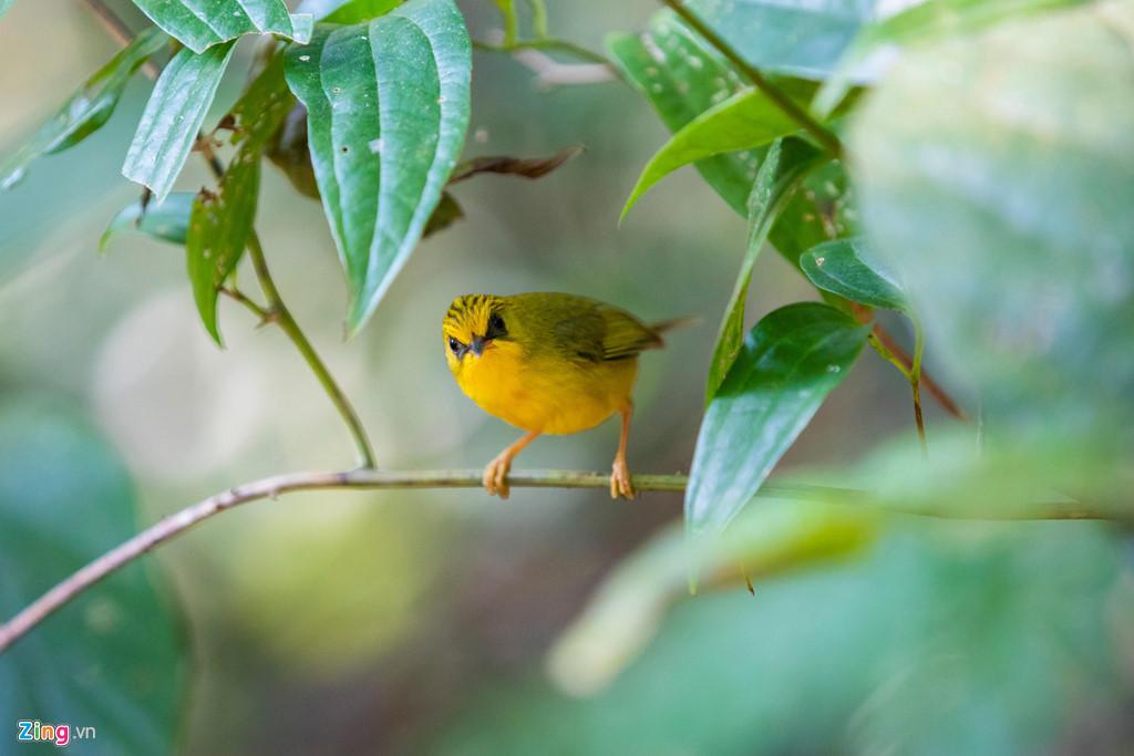 Nếu may mắn, bạn có thể bắt gặp các loài động vật quý hiếm khi đi bộ khám phá rừng.