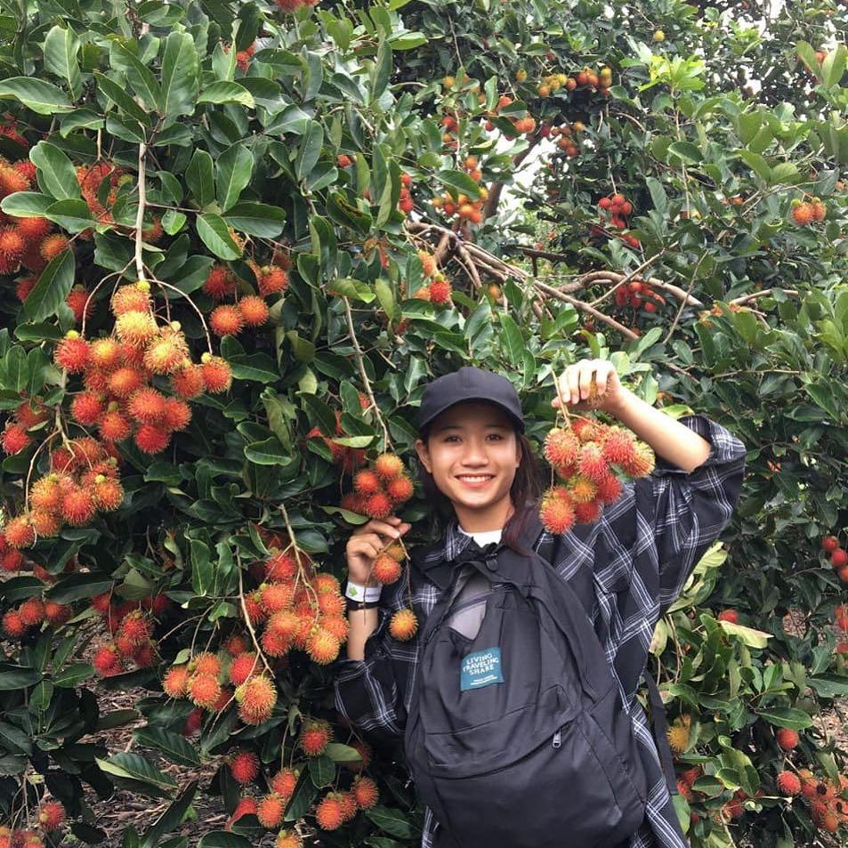 Ghé ngay 15 vườn trái cây ở Long Khánh - ăn tẹt ga chỉ từ 10k - iVIVU.com