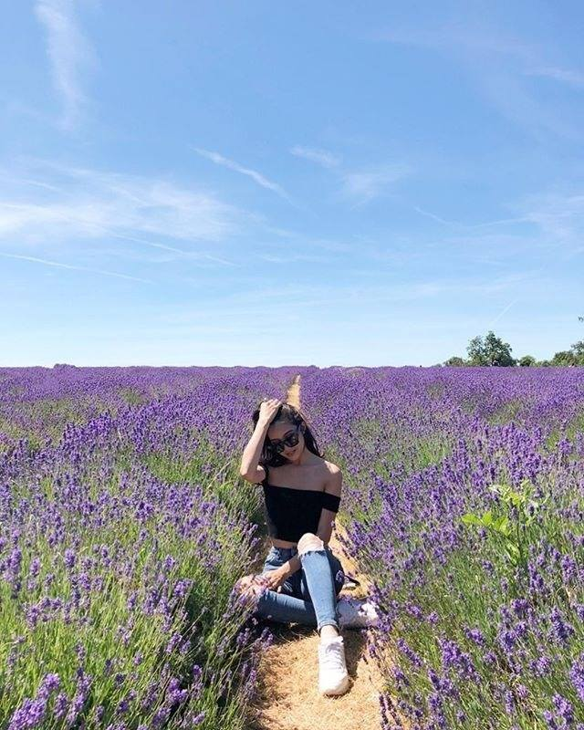 Cánh đồng hoa Lavender - Update giá vé tại 25 điểm du lịch Đà Lạt hot nhất 2019