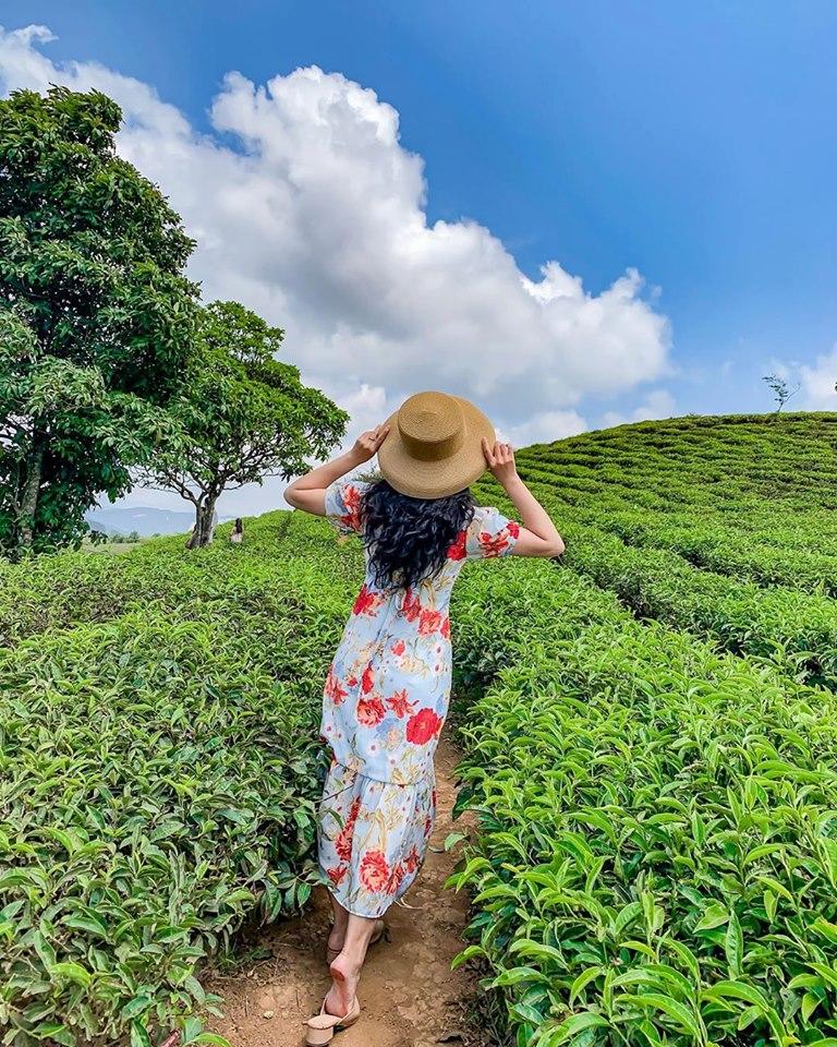 Đồi chè Cầu Đất - Update giá vé tại 25 điểm du lịch Đà Lạt hot nhất 2019