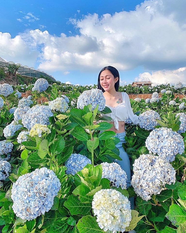 Vườn cẩm tú cầu- Update giá vé tại 25 điểm du lịch Đà Lạt hot nhất 2019