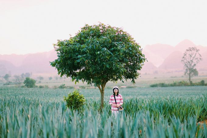 Nằm cách trung tâm Hà Nội khoảng 100 km, cánh đồng dứa này nằm trong một nông trường ở Tam Điệp, Ninh Bình. Nếu đã check-in ở Tràng An, hang Múa hay Tam Cốc - Bích Động, bạn có thể tìm đến địa chỉ mới này. Ảnh: @mievatho.
