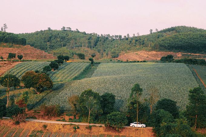 Dứa còn là đặc sản nổi tiếng của vùng đất Tam Điệp, bên cạnh dê núi, cơm cháy hay cá rô Tổng Trường. Tổng diện tích của nông trường khoảng 5.500 ha với khoảng 1.800 hộ chuyên làm nghề trồng dứa. Ảnh: @mievatho.
