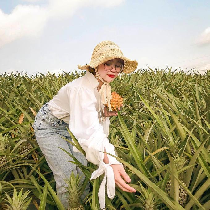 """Không chỉ được tham quan cánh đồng dứa, bạn còn có cơ hội trở thành những nông dân thực thụ đi """"thu hoạch"""" dứa. Hiện các vườn dứa ở đây không thu phí tham quan hay chụp ảnh, bạn nên xin phép chủ vườn trước khi bước vào. Ảnh: @trinhh_tee96."""