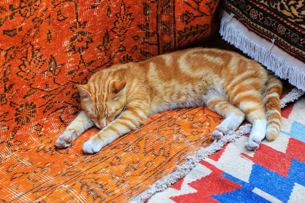 Thảm được sử dụng trong hầu hết không gian gia đình và hàng quán ở Thổ Nhĩ Kỳ, từ treo tường, trải bàn, lót ghế, trải sàn..., mang lại cảm giác vô cùng ấm cúng