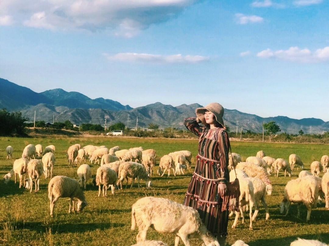 Hè này, đến Ninh Thuận check-in cánh đồng cừu An Hòa đẹp như trời Âu bạn  không thể bỏ lỡ - iVIVU.com