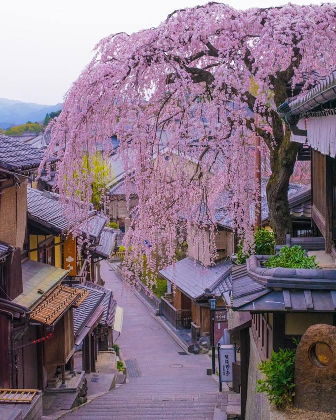 Trong đó, góc phố có cây anh đào trăm tuổi trên đường Sannen-zaka là một trong những nơi check-in nổi tiếng nhất Kyoto. Nếu du lịch vào mùa cao điểm, bạn chắc chắn không thể nào chụp được bức ảnh ưng ý khi đi chơi vào ban ngày vì quá đông đúc. Giải pháp duy nhất là đến đây vào sáng sớm hoặc tối mịt.